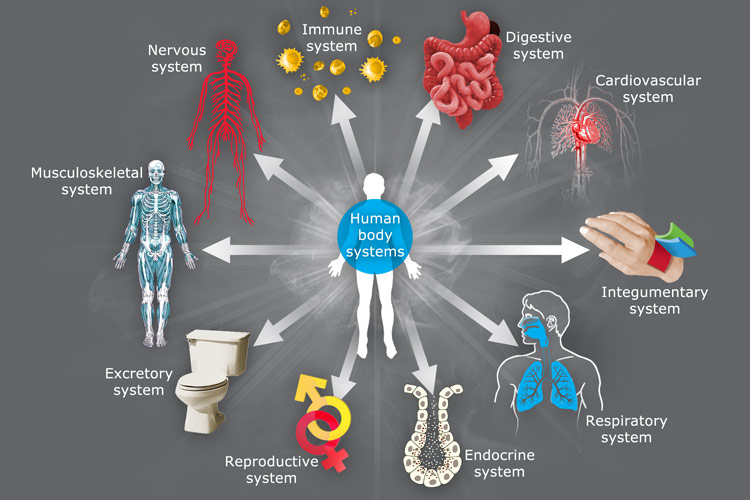 The Body System And The National System A Comparison Blog Pyramid